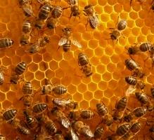 Caixa d'abelles